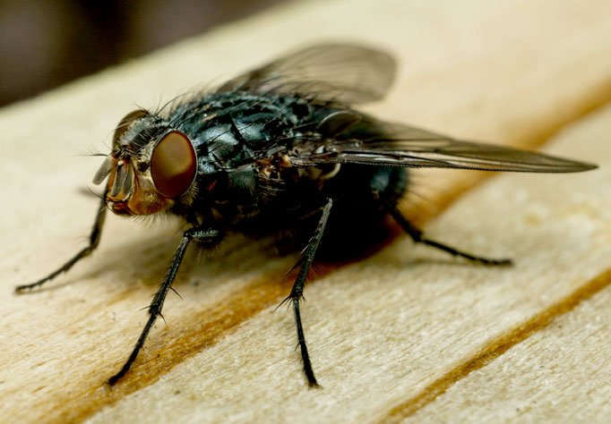 Pest Identification   Complete Pest Control, Inc